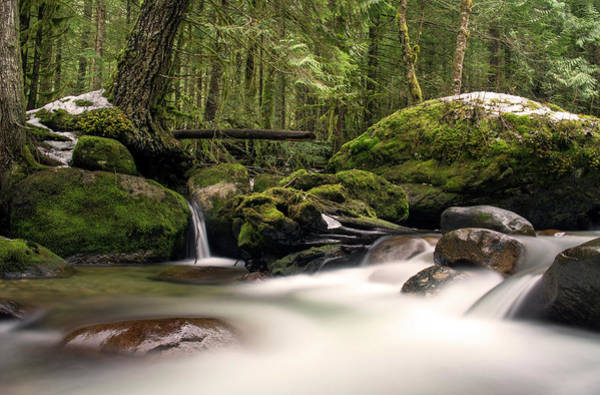 Cascade Wall Art - Photograph - Fern City by Jason Wilde