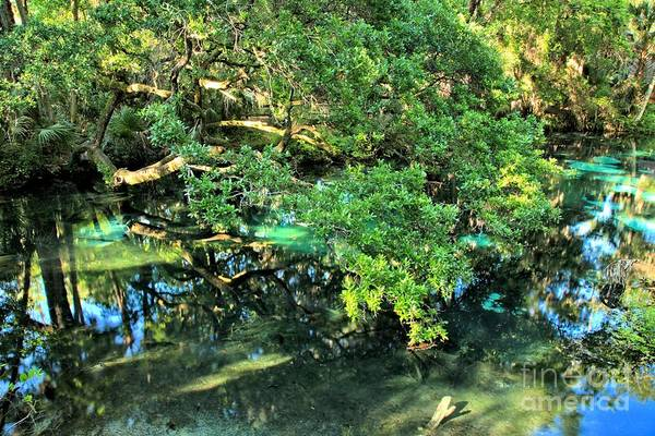 Photograph - Fern Hammock At Juniper Springs by Adam Jewell