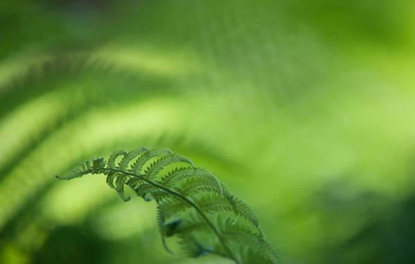 Photograph - Fern Leaf 1. Healing Art by Jenny Rainbow