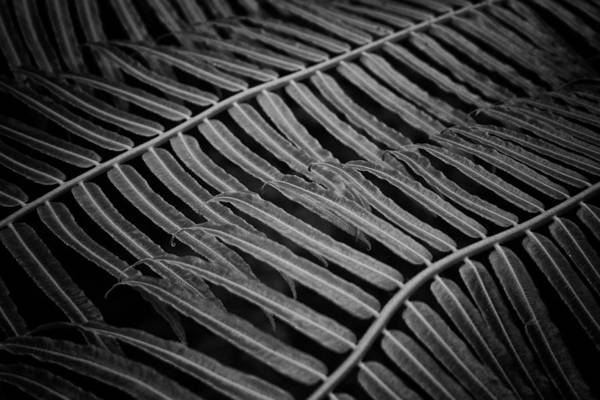 Photograph - Fern Lines by Ben Shields