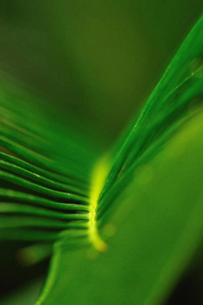 Photograph - Fern Lines by John Kiss