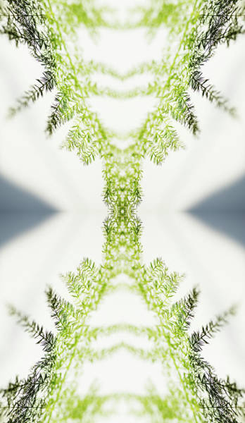 Vertical Abstract Photograph - Fern by Silvia Otte