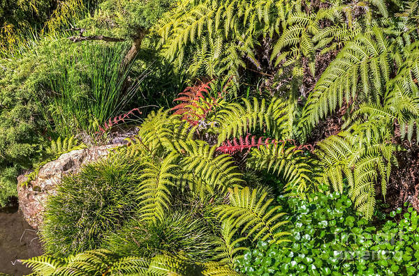 Photograph - Ferns And More by Kate Brown
