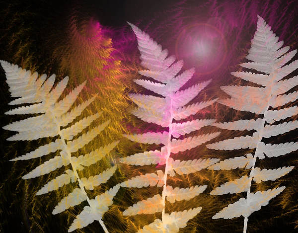 Leave Digital Art - Ferns by Louise Grant