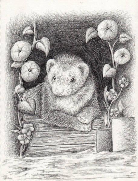Ferrets Drawing - Ferret Portrait by Jeanette K