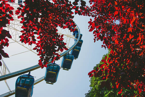 Wall Art - Photograph - Ferris Wheel by Pati Photography