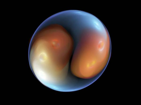 Division One Wall Art - Photograph - Fertilised Ivf Embryo by Equinox Graphics