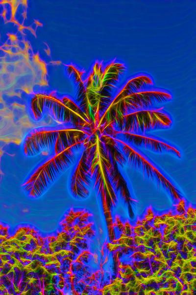Photograph - Festive Coconut Palm by John M Bailey