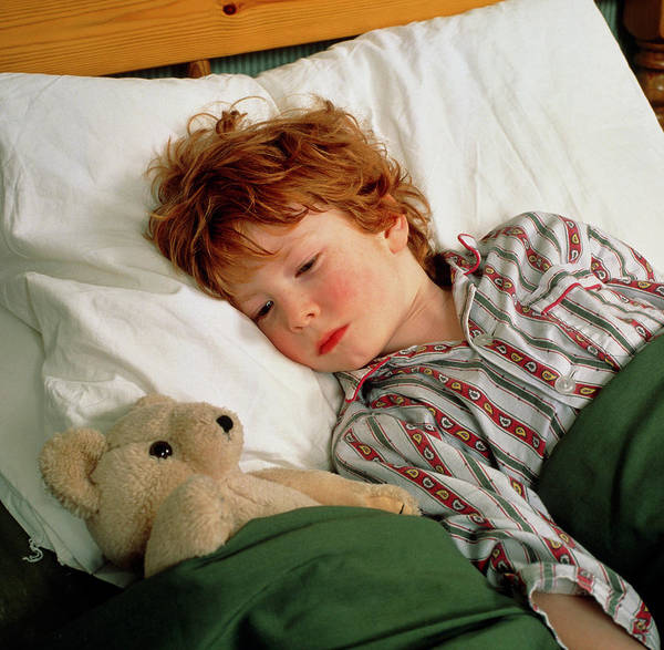 Fever Photograph - Feverish Child In Bed With Teddy Bear by Chris Priest/science Photo Library