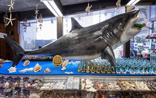 I-75 Photograph -  Stuckey's Jaws by Gary Warnimont