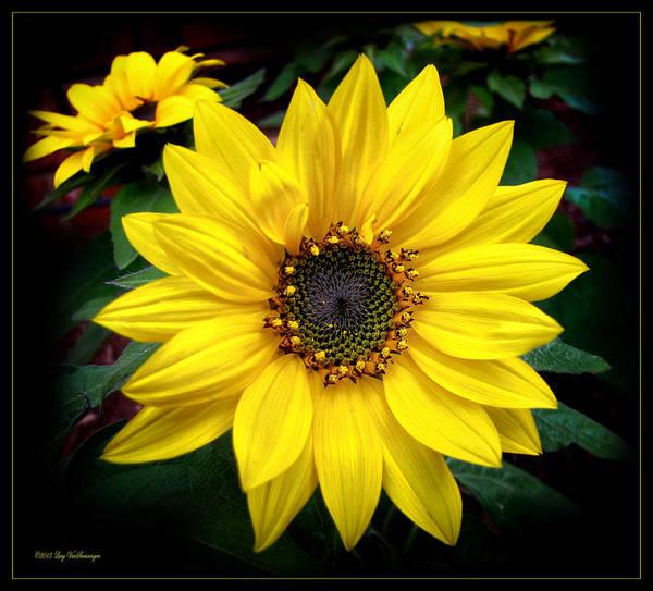 Photograph - Fibonacci Finery by Lucy VanSwearingen
