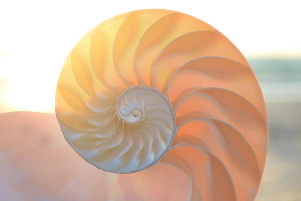 Photograph - Fibonacci by Melanie Moraga
