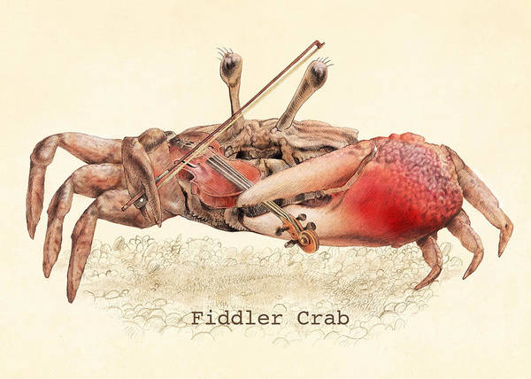 Red Drawing - Fiddler Crab by Eric Fan