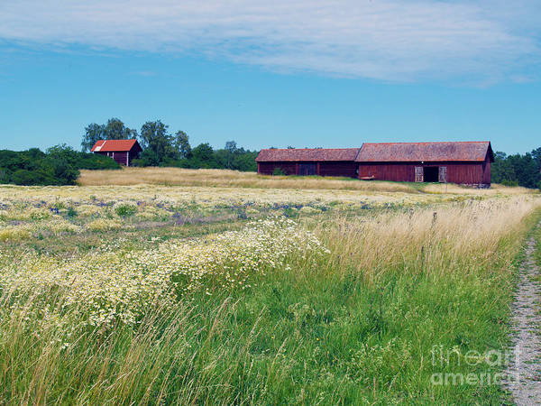 Photograph - Field And Barns by Robin Maria Pedrero