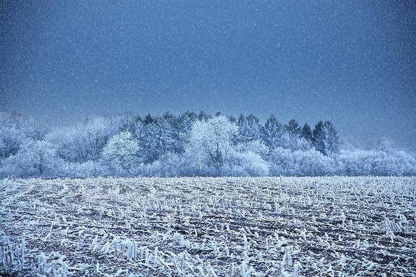Wall Art - Photograph - Field Covered In Hoar Frost by Samuel Ashfield/science Photo Library