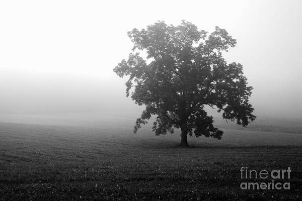 Photograph - Field In Cades Cove by Deborah Scannell