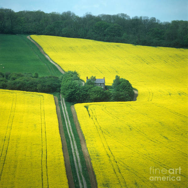 Photograph - Field In May by Nigel Cattlin