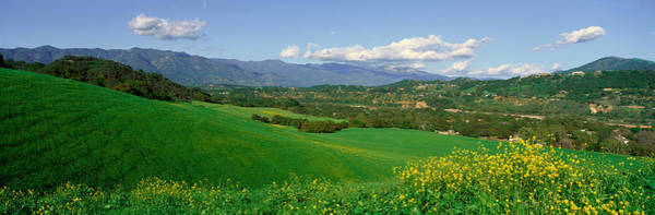 Wall Art - Photograph - Field In Springtime, Ojai, California by Panoramic Images
