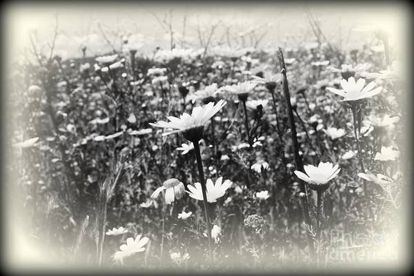 Daguerrotype Photograph - Field Of Beauty by Clare Bevan