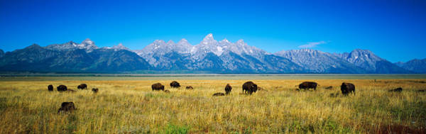 Wall Art - Photograph - Field Of Bison With Mountains by Panoramic Images