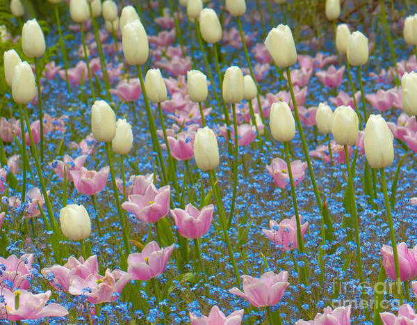 Wall Art - Photograph - Field Of Blooms by Sarah Crites