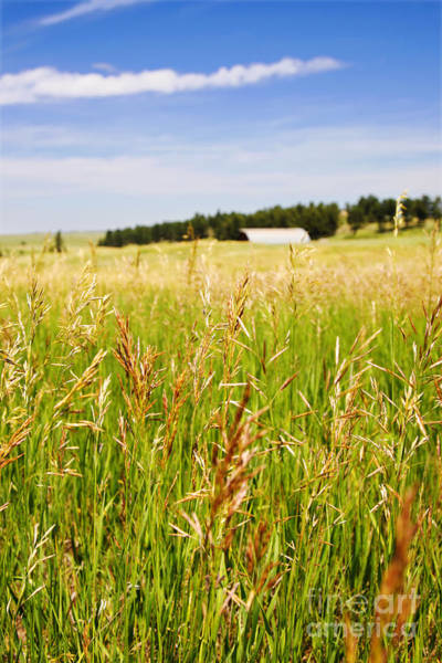 Photograph - Field Of Brome Grass With Barn by Lincoln Rogers