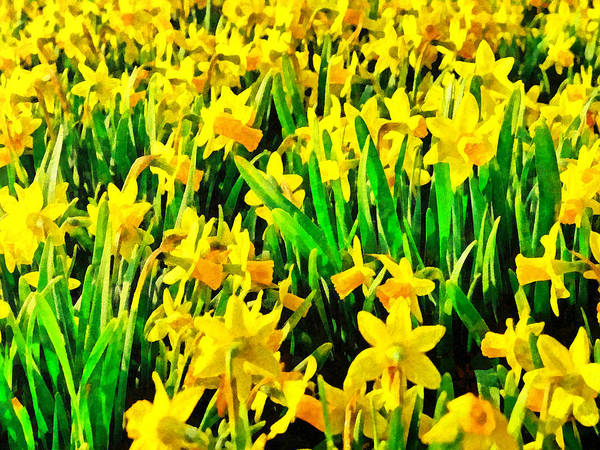 Digital Art - Field Of Daffodils by Digital Photographic Arts