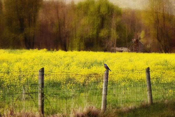 Wall Art - Photograph - Field Of Dreams II by Kathy Jennings