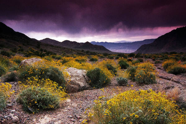 Spider Rock Photograph - Field Of Dreams by Kenan Sipilovic