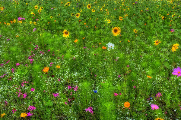 Photograph - Field Of Wildflowers by Joann Vitali