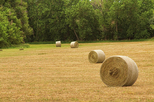 Unframed Wall Art - Photograph - Field Of Freshly Baled Round Hay Bales by James BO Insogna