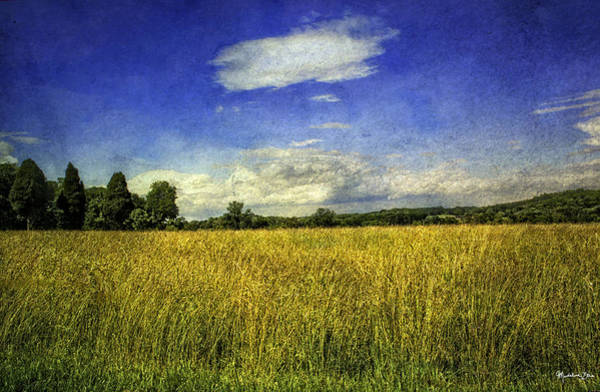 Wall Art - Photograph - Field Of Gold by Madeline Ellis