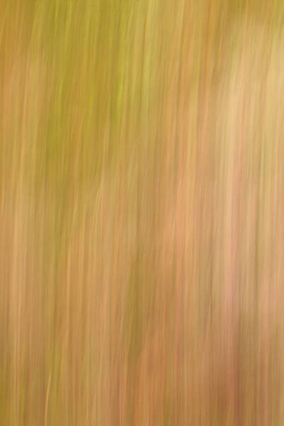 Photograph - Field Of Grass by Steve DaPonte