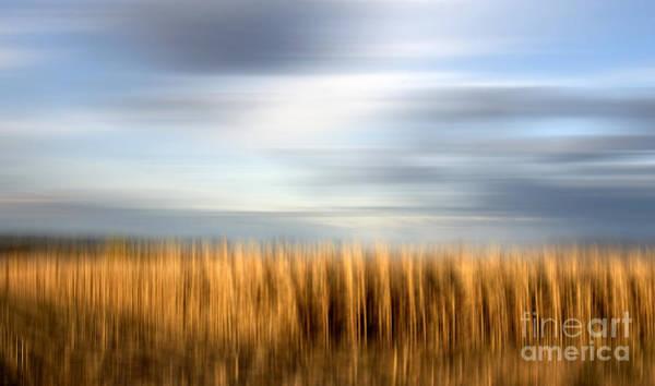 Dreary Photograph - Field Of Maize by Bernard Jaubert