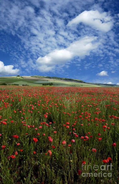 Corn Field Photograph - Field Of Poppies. France by Bernard Jaubert