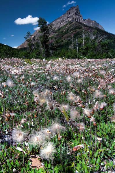 Wall Art - Photograph - Field Of Seeding Flowers by James Wheeler