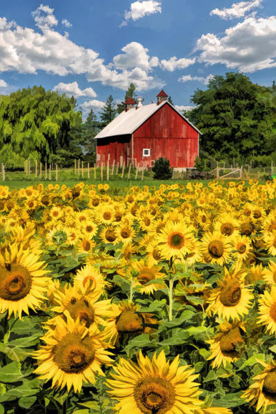 Painting - Field Of Sunflowers by Christopher Arndt