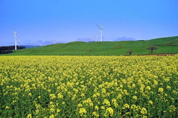 Scenery Photograph - Field Of Tenderstem Broccoli by The Landscape Of Regional Cities In Japan.