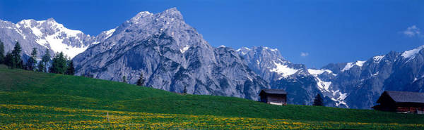 Alpine Meadows Photograph - Field Of Wildflowers With Majestic by Panoramic Images