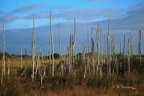 Photograph - Field Stripped I by R B Harper