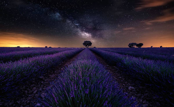 Lavender Wall Art - Photograph - Fields Of Castilla by Jorge Ruiz Dueso