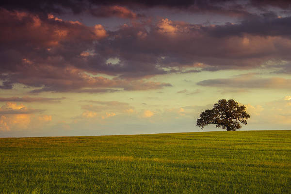 Wall Art - Photograph - Fields Of Deleon by Aaron Bedell