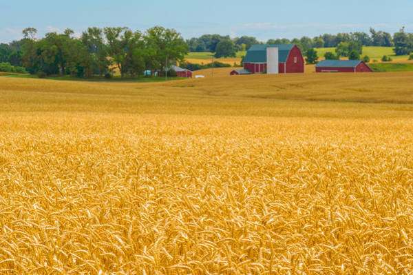 Photograph - Fields Of Gold by Garvin Hunter