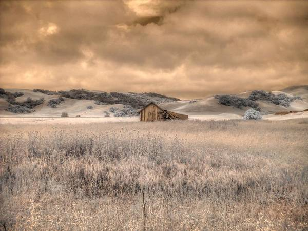 Linder Wall Art - Photograph - Fields Of Gold by Jane Linders