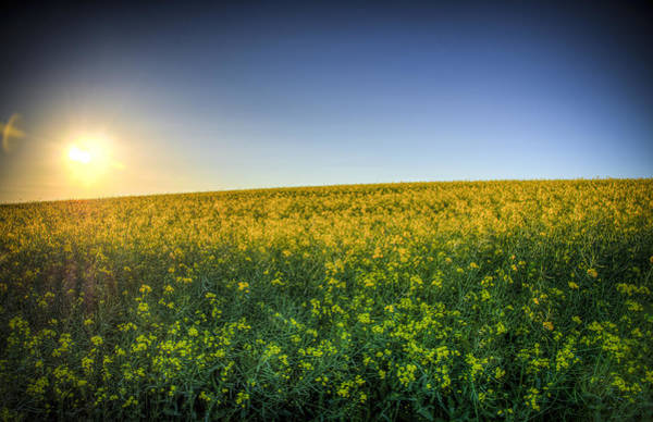 Photograph - Fields Of Gold by Ross G Strachan