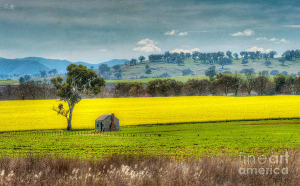 Photograph - Fields Of Gold by Russell Brown