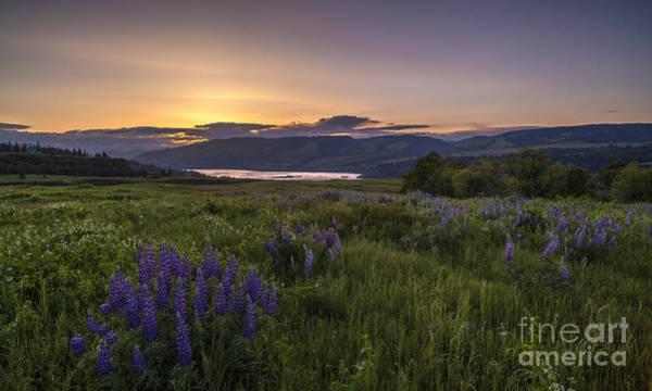 Rowena Photograph - Fields Of Lupine by Mike Reid