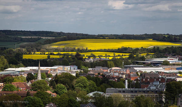 Photograph - Fields Of Yellow by Ross Henton