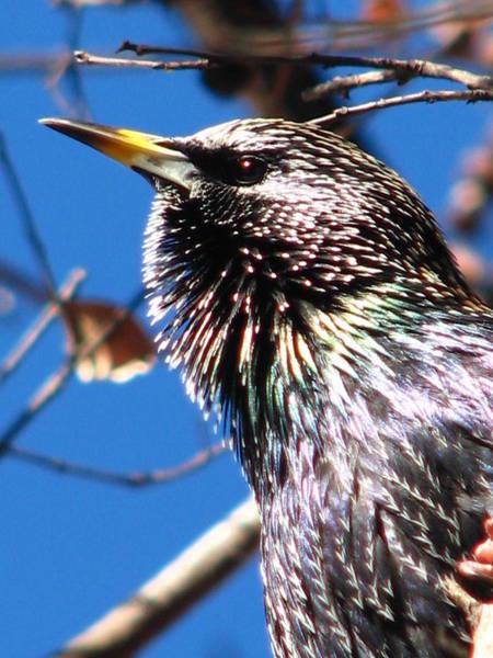 Photograph - Fierce Bird by Cleaster Cotton