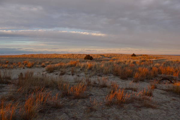 Photograph - Fiery Dunes by Amazing Jules